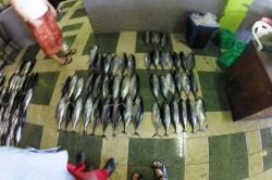 Ryby připravené k prodeji
