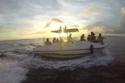 Maledivy - pozorování delfínů