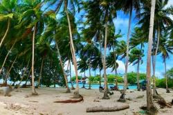 palmy Maledivy