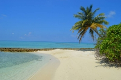 pláž s palmou