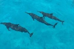 Maledivy delfíni