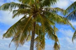palma na kraji pláže