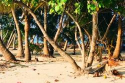palmový háj Maledivy