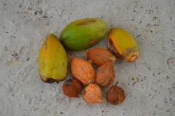 kokosové ořechy