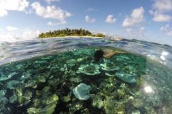 korálový útes Maledivy