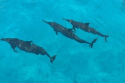 delfíni na Maledivách