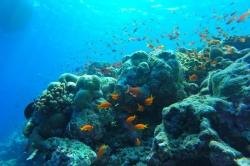 bohatý podmořský život