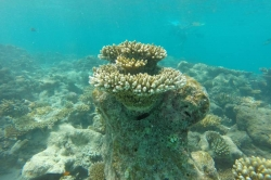 Nádherný korál