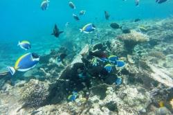 Šnorchlování v korálové zahradě