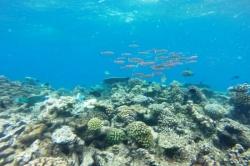Hejno ryb a korály