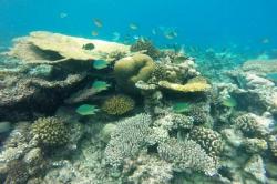 Krásné korály