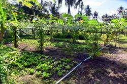 zemědělství na Maledivách