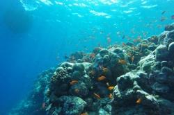 korálové rybky