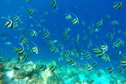bohatý podmořský život na Maledivách