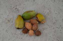 Spadané kokosy