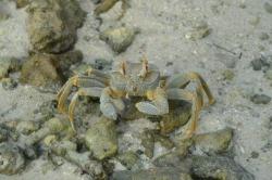 Krab na ostrově