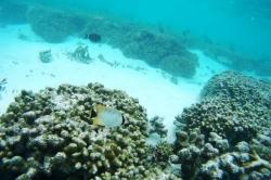 Maledivy šnorchlování (2)