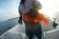 Maledivy sunset fishing