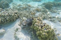 Podmořský život na Maledivách