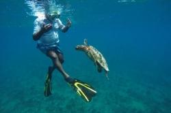 Maledivy šnorchlování