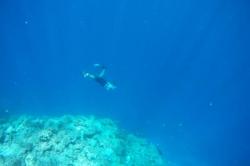 šnorchlování na Maledivách
