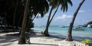 Maledivy, palmový háj