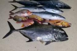 Maledivy rybářský úlovek