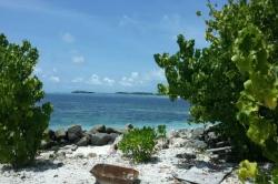 Maledivy, útes