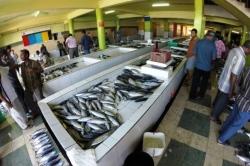 Čerstvé ryby k prodeji