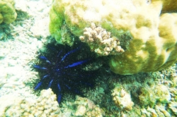 Podmořský život u ostrova Huraa