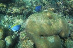 Nemo na Maledivách