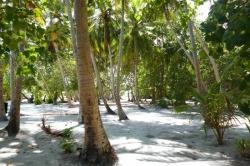 Palmový háj na Huraa
