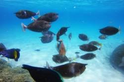 pod-vodou