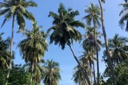 palmy a nebe na Maledivách