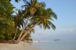 palmy nad pláží