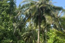 palmy a modrá obloha