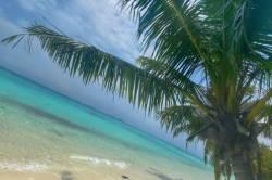 palma, písek a moře