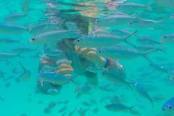 plavání mezi rybami