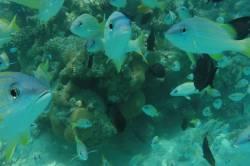detail korálových rybek