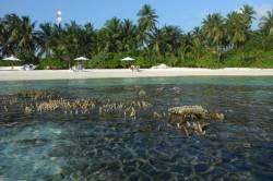 pláž při odlivu