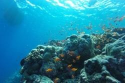nejlepší šnorchlování na Maledivách