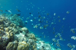 mořské rybičky
