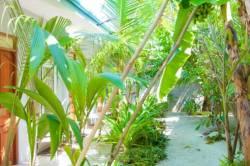 zeleň v penzionu