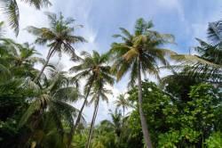 ostrov-Fulhadhoo-2
