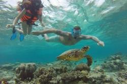 plavání se želvami na Maledivách