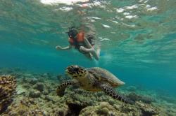 želva ve vodě