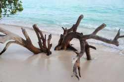 kmeny palem na pláži