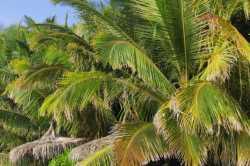 palmy a lehátko