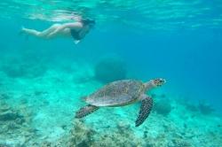 mořské želvy