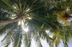palmy na Maledivách